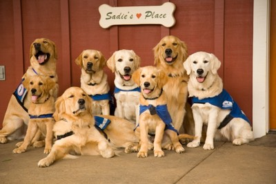 Sadie's Place for training at Assistance Dogs of Hawaii
